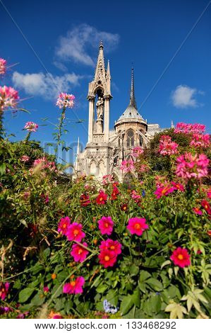 Notre Dame from Square du Jean XXIII Paris. Flowers on foreground