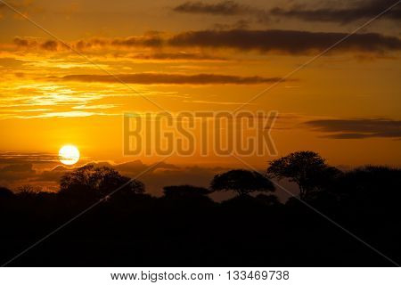 African Sunset With Trees