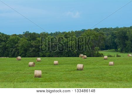 Hay bales scattered in a Missouri hay field