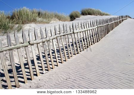 white sand on the beach with dunes in summertime