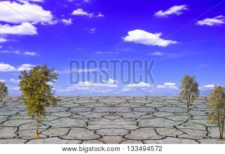 The concept should plant trees to reduce global warming under the sky and the earth cracked dramatic natural disasters for design texture pattern and background.
