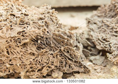 Termites swarm and pattern of soil nest