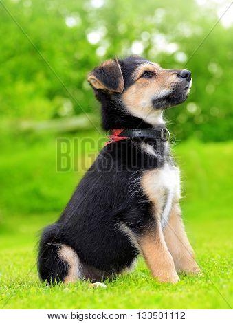 Cute puppy crossbreed dog in green grass.