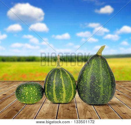 Three ripe green pumpkins on wooden board