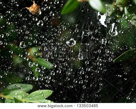 Macro of web with water drops after the rain