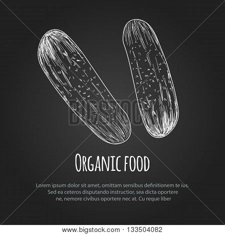 Hand drawn cucumber over white background. Vector