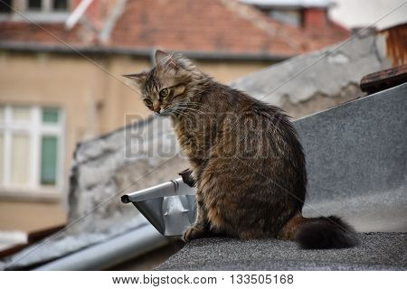 A cat sitting on a rooftop, looking down for prey