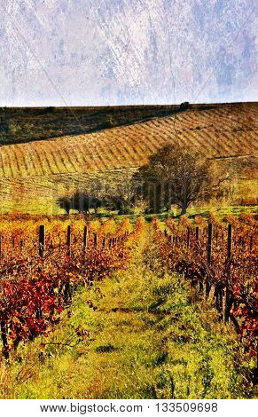 Landscape with a vineyard in autumn colors