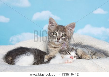 Gray tabby kitten awake paws holding sibling sleeping on sheep skin blanket with blue background with clouds. copy space above