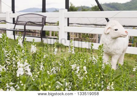 background nature garden flowers sheep look view