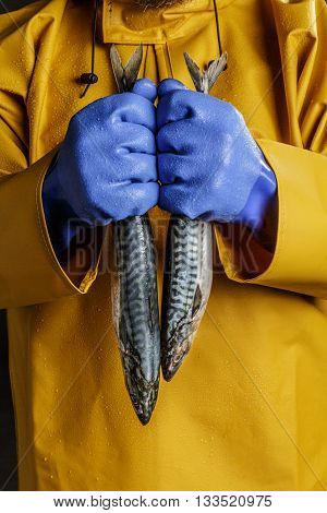 Close up of fisherman's hands in blue gloves holding mackerel fish.
