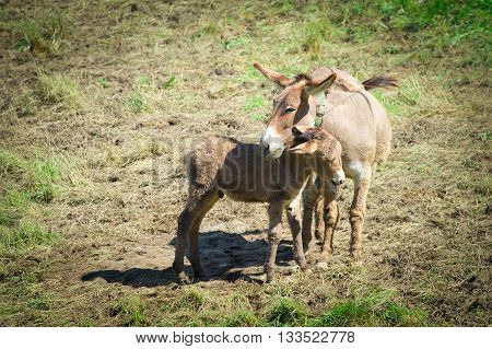 Mom Horse With Small