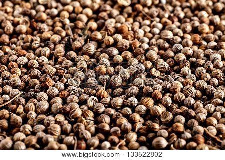 Close up of Many organic dried coriander seeds Coriandrum sativum. Top view