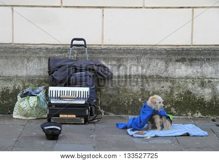 a dog with accordion outdoor in Vicenza Italy