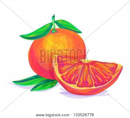 Vector hand drawn painting fruit. Grapefruit on white background. This is illustration ideal for a mascot and T-shirt graphic. Stock illustration