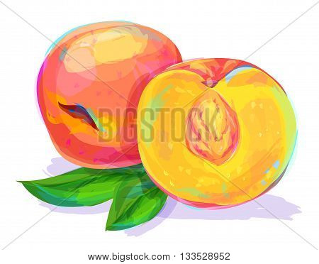 Vector hand drawn painting fruit. Peach on white background. This is illustration ideal for a mascot and T-shirt graphic. Stock illustration