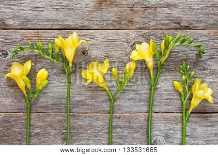 Yellow freesia flowers on old wooden background