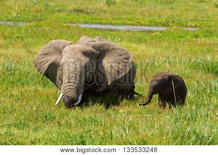 Mother and her baby elephants in a pond. Shot at Amboseli national park Kenya