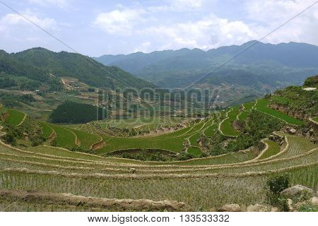 Bright green rice terraces of Sapa, northern Vietnam