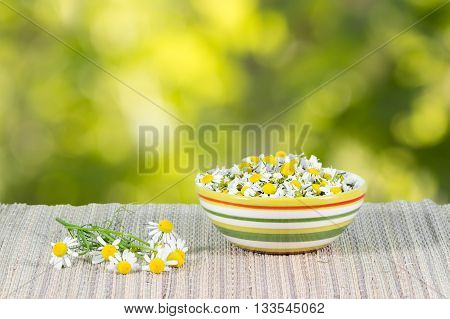 assembled chamomile flowers in ceramic cup on a background of chamomile flowers at sunny day
