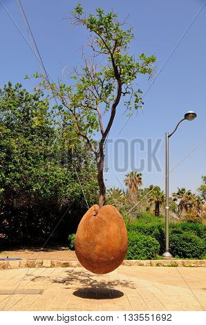 Hovering orange tree in old Jaffa, symbolizing prosperity of Israel.