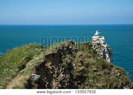Seagull Flying Off The Cliff