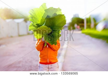 child holding a large leaves and hiding behind them. weeding. the child has collected a bunch of leaves of burdock. blurred background