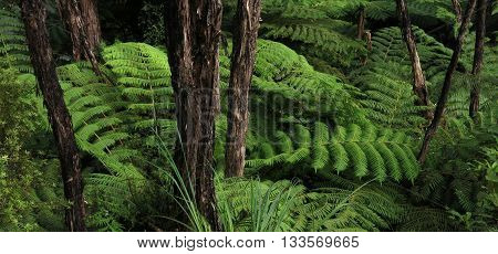 Scene in the Abel Tasman National Park New Zealand. Green fern.