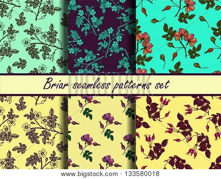 Briar seamless vector patterns set. Collection of color seamless vector patterns with eglantine.