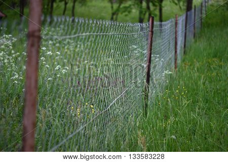 Metal chain-link fence dividing two green blossoming gardens