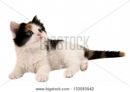 animal, baby little kitten on white background