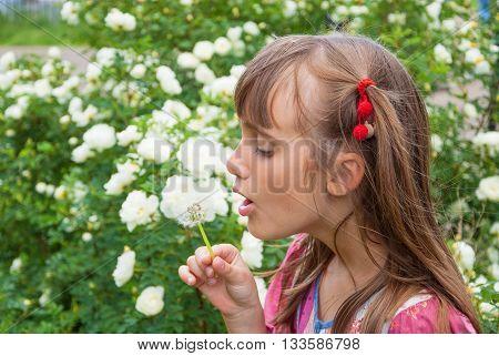 Sweet girl in a garden blowing on dandelion