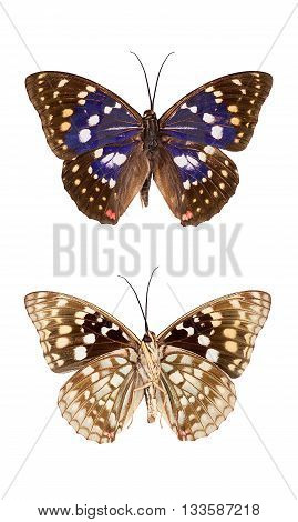 Top and bottom view insect butterfly isolated