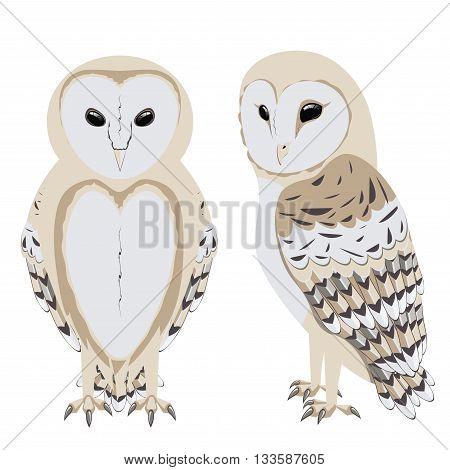 Illustration of cartoon barn owl on white background.