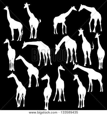 illustration with giraffe silhouettes isolated on black background