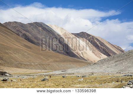 Along way to Pangong Lake view of Spectacular Mountain Scenery Himalaya Range Background.