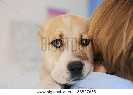 Woman holding Central Asian Shepherd puppy, closeup