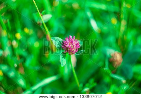 Flower In a field with a lot of green grass. Green back ground