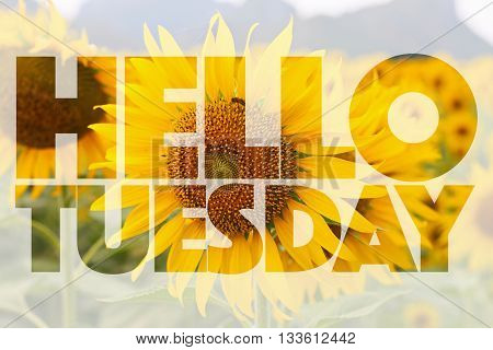 Hello Tuesday word on sunflower - background