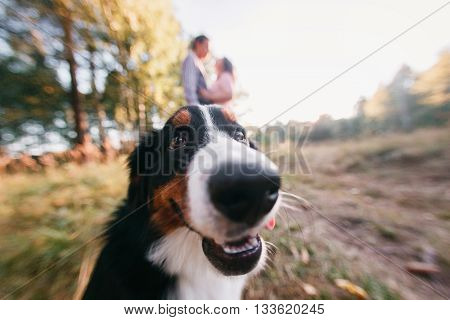 Portrait of happy young couple in stylish clothes feeding dog outside. autumn forest.