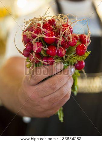 Farmer holding out his fresh radish at a farmer's market