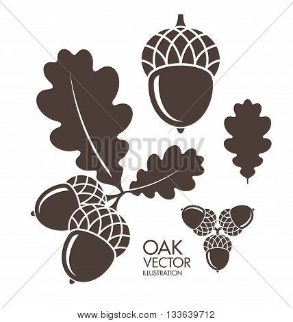 Oak. Acorn. Leaf. Isolated on white background. (EPS)