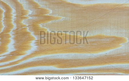 Part of Larch tree wood texture - far eastern wood