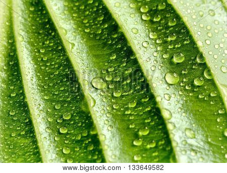 green background with leaf and drops of water