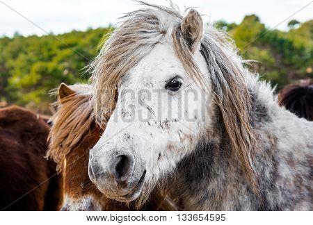Pony outdoors. Photo taken in Safari park in Spain