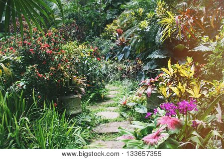 Footpath in the garden located in the jungle of Barbados