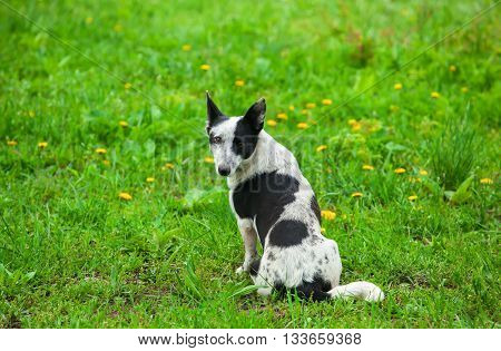 Funny dog sitting on the grass in the park