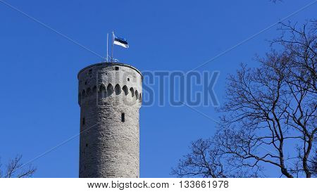 Massive old historic tower in Tallinn (Estonia) with a flagpole and the waving flag of Estonia on it. Blue cloudless sky and trees surrounding the scene.