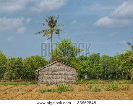 Simple wooden bamboo shed in front of a tall tree, a forest and the blue sky with some clouds.