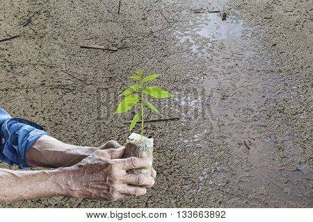 Old man hands holding green young plant with Land dry and cracked ground